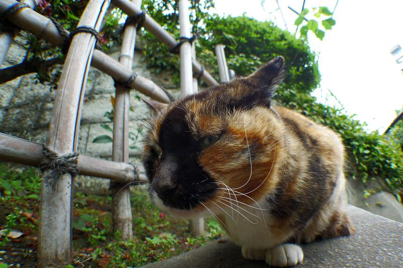 ローアングルと広角で猫を写す