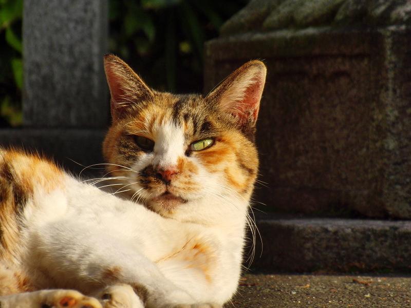 夕日を浴びてビックリ顔のネコ