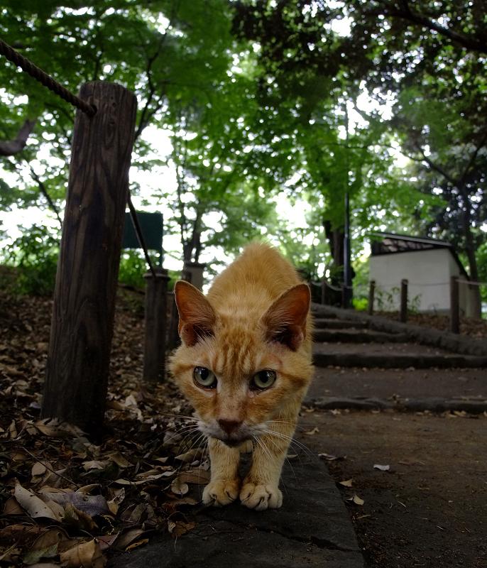 日陰の公園でローアングルで猫との見つめ合い