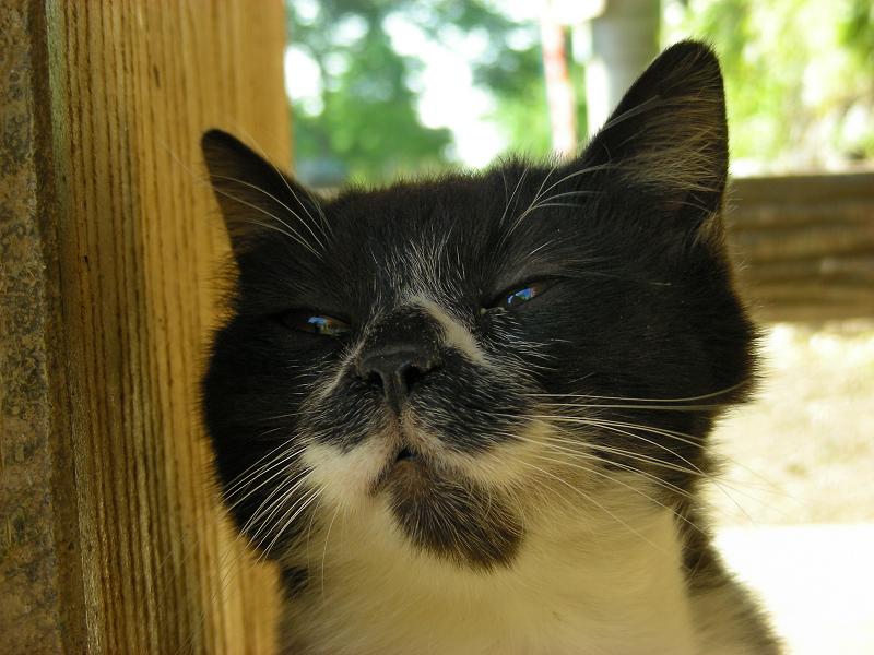 ベンチしたのユニークで可愛い黒白猫