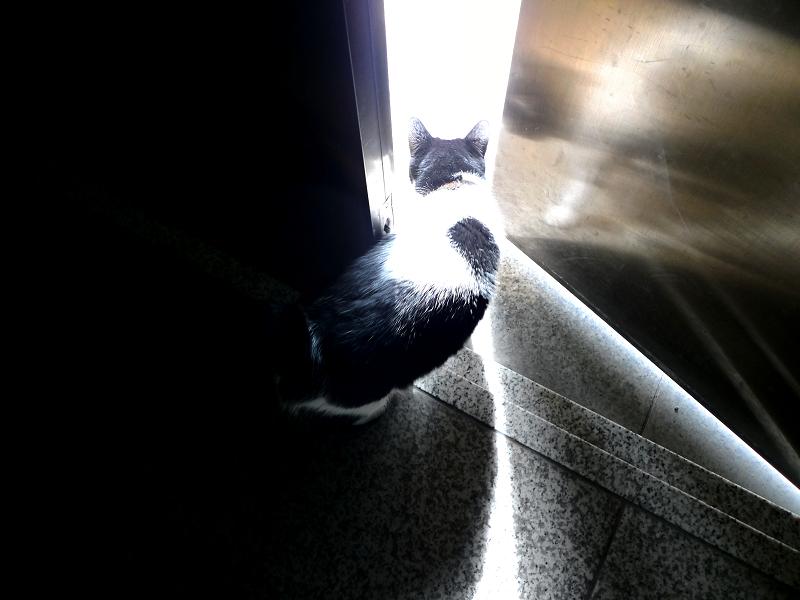 暗闇から明るい所へ出るネコ