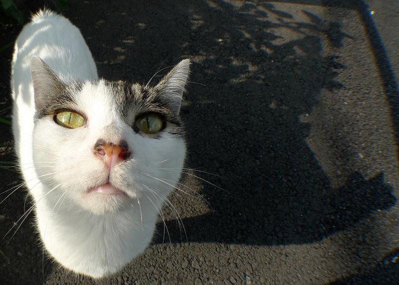 私を見上げる猫
