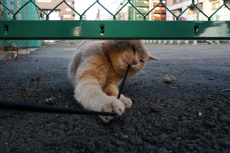 空き地で遊んだネコ
