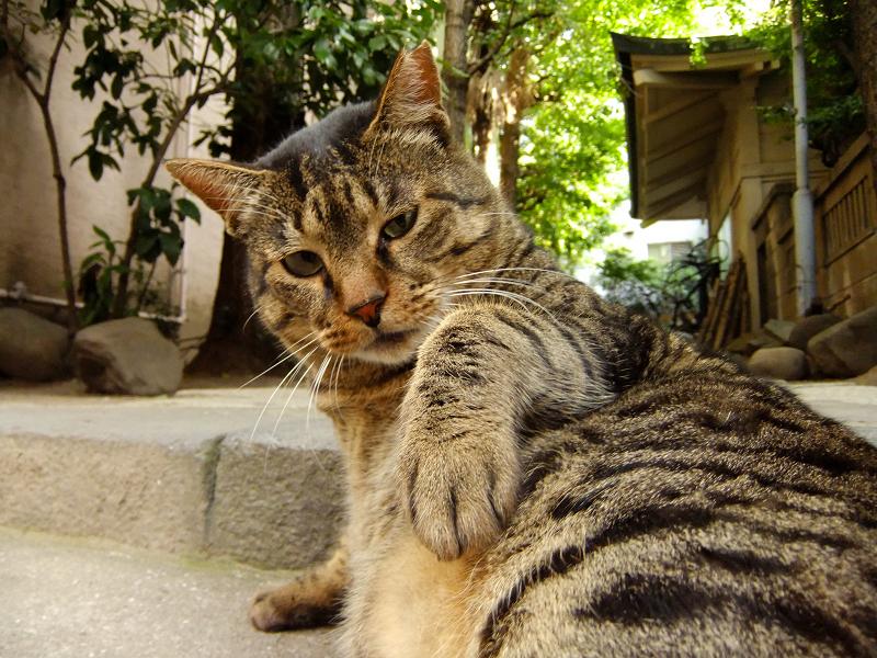 横座りしている猫