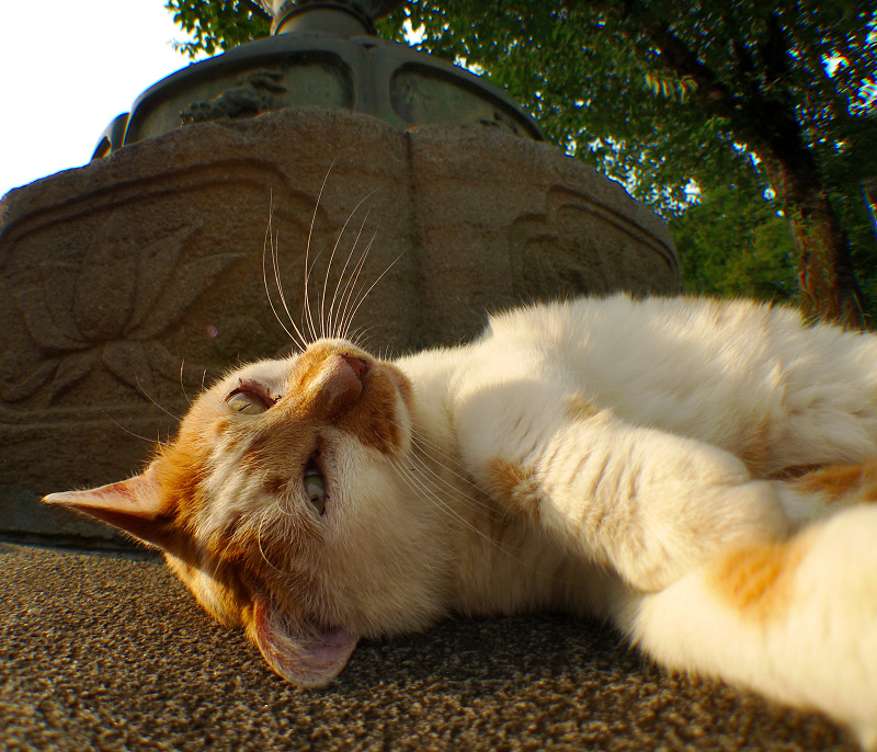 灯籠の下で仰向けで流し目の猫を広角で