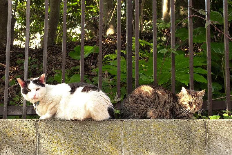 塀の上に後ろ向きで向かい合う猫