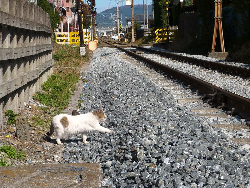 線路を渡ろうとするネコ