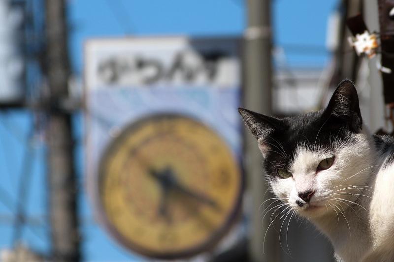 ネコと時計