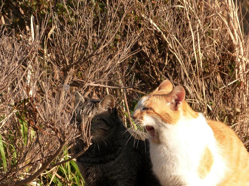 対照的な表情のネコたち