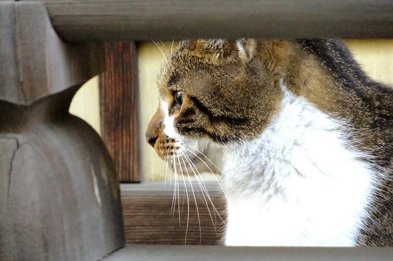 欄干と濡れ縁のネコ