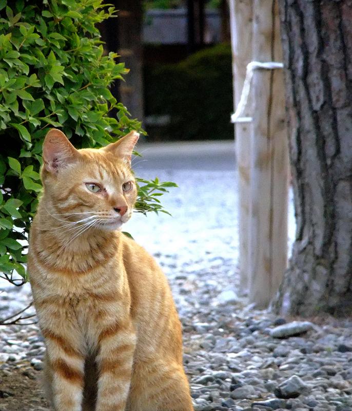 素っ気ない表情で遠くを見ている猫