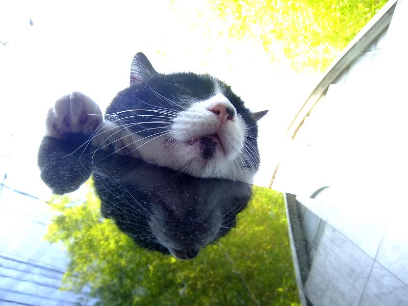 黒御影石の上でまったりする猫