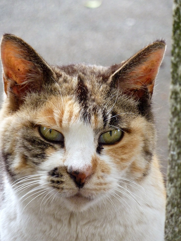 ちょこっと渋めの表情の猫