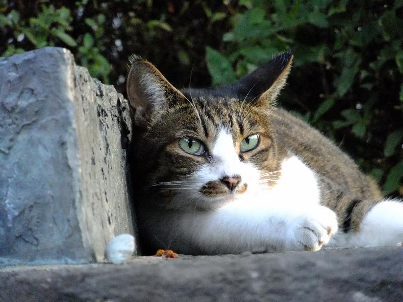 翡翠のような瞳の色の猫