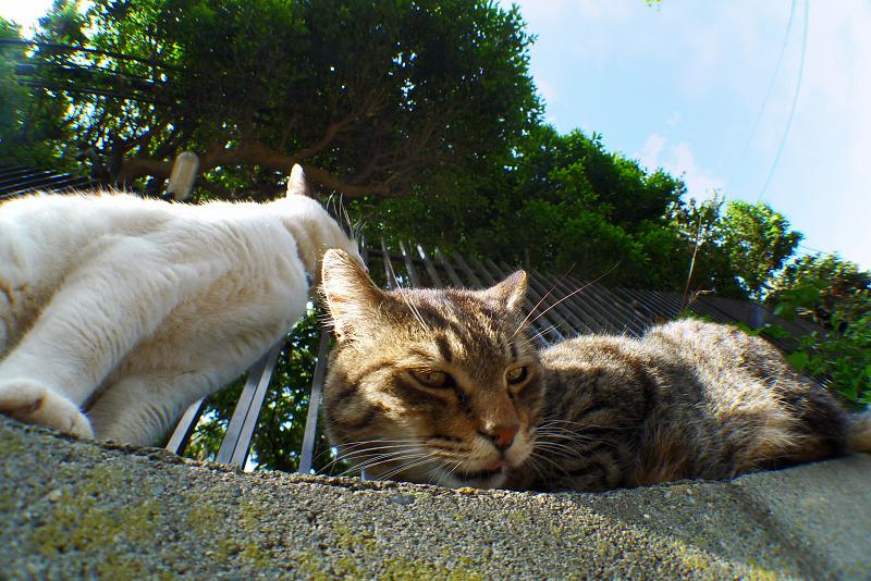 塀の上に居る猫をローアングルで撮影