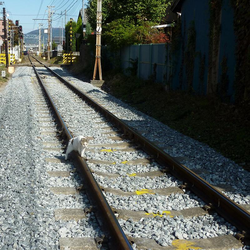 鉄道のレールの上を歩くネコ