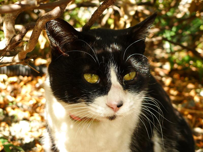 茂みの中の木漏れ日ネコ