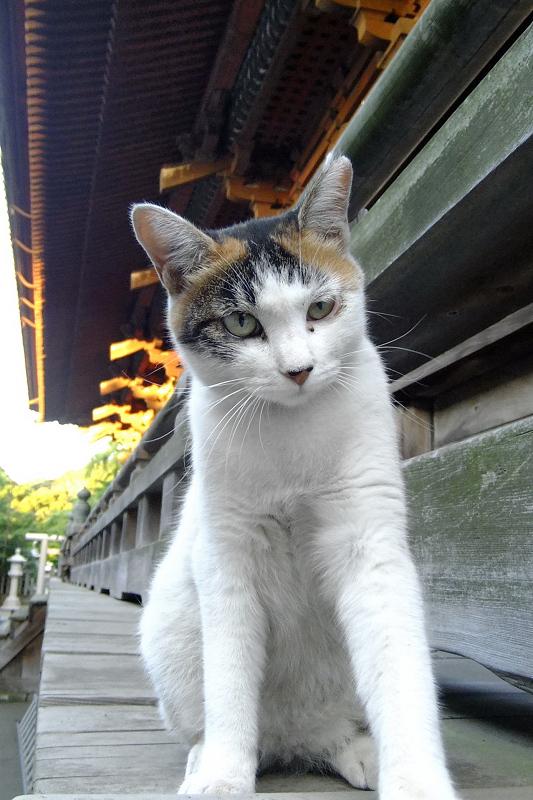 お寺の欄干の外にいた猫