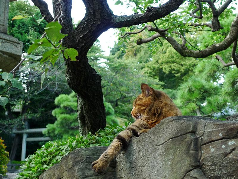 庭石の上で寝てるネコ