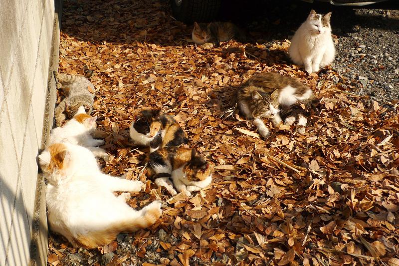 駐車場の落ち葉の上にいるネコたち