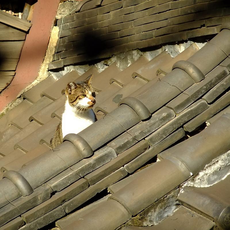 古びた屋根瓦とネコ