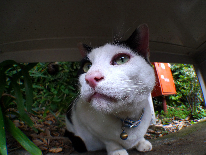 腹ばう猫を広角ローアングルから
