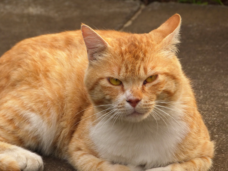不愉快そうに視線を逸らす猫