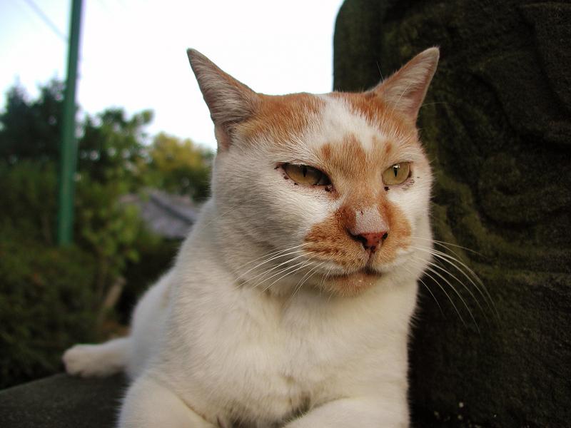 お寺の灯籠の台座で寛ぐ猫