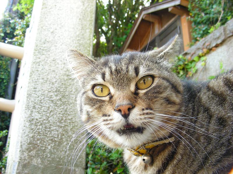 口を半開きにしてる猫をローアングルで写す