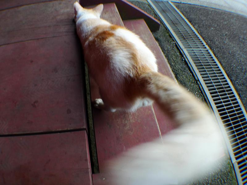 尻尾をひゅんひゅんと振る猫