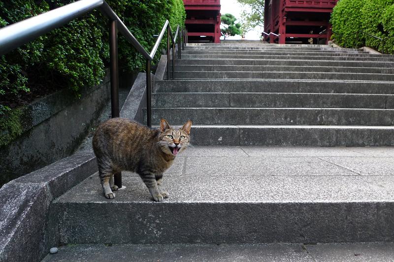 階段の踊り場で鳴くネコ