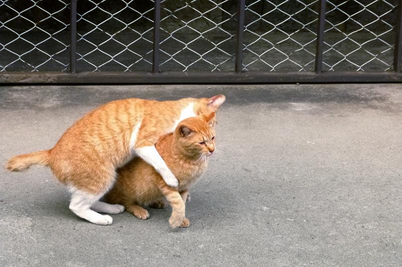じゃれ合ってる感じの2匹の猫