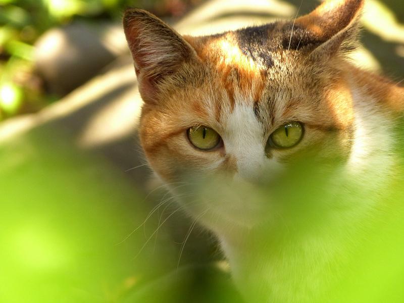 若葉色の茂みネコ