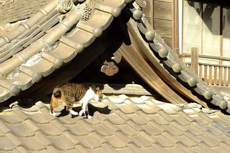 古びた屋根の上を歩くネコ