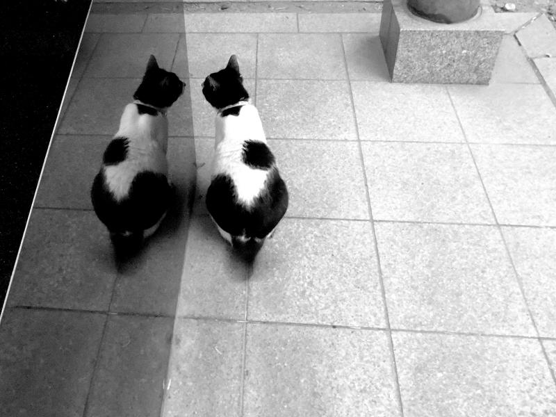 黒御影石に姿が映り込んでる猫