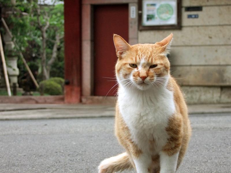 お寺の境内で出会った猫