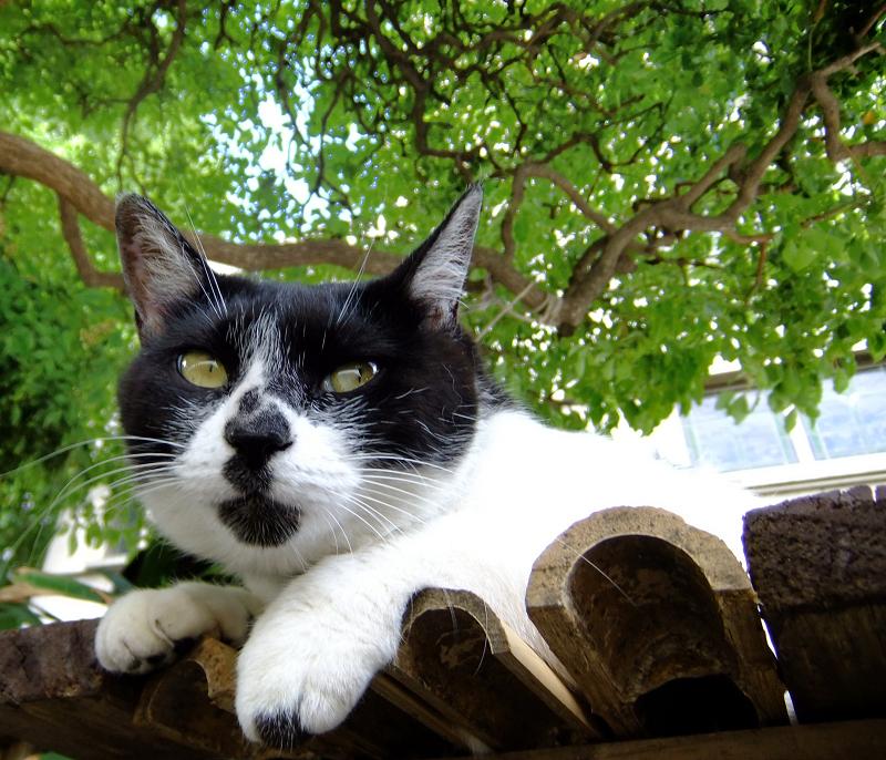 楠の木の下のベンチでノンビリしてる猫