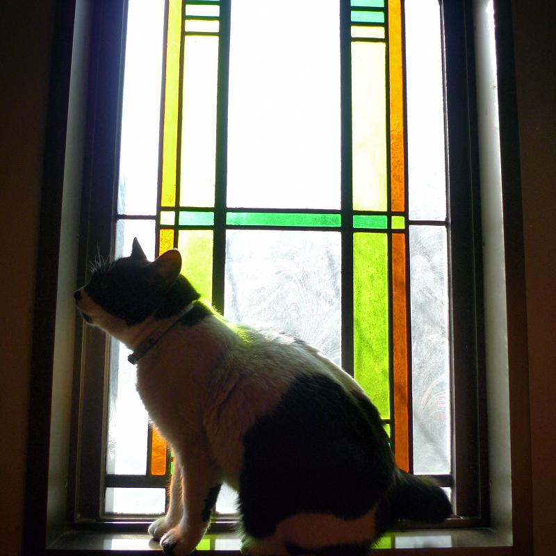 ステンドグラスの前のネコ