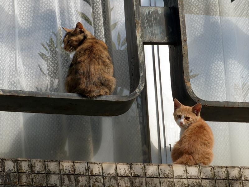 窓枠の外で振り返るネコ