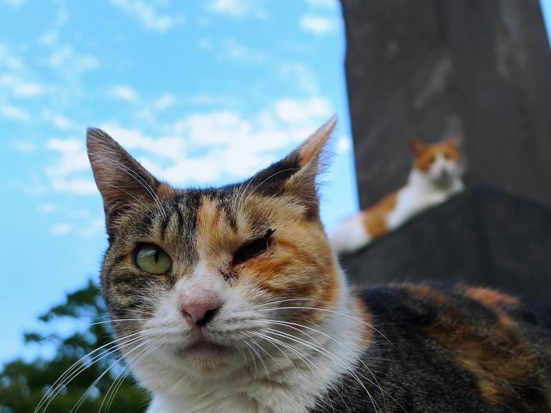 青空とネコ