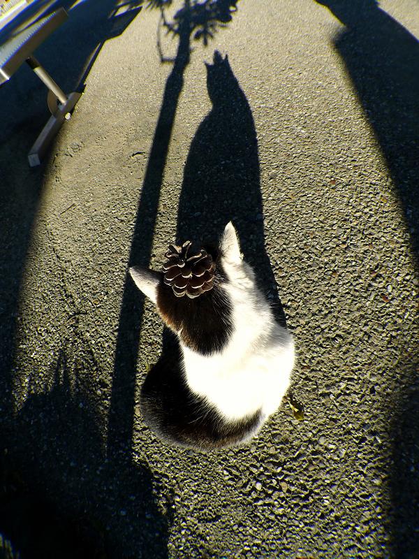 松ぼっくりのネコと影