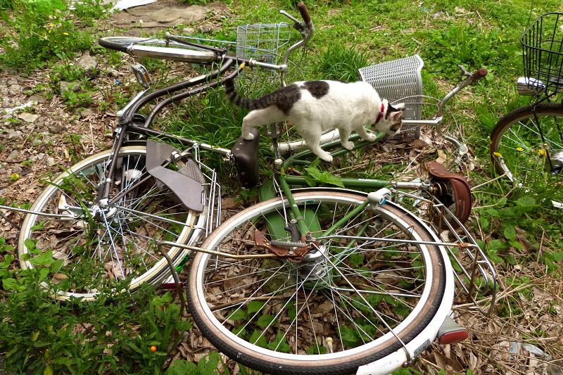 放置自転車の上を歩く猫