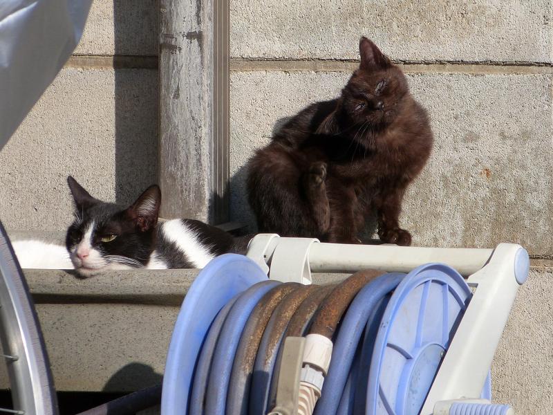アゴ乗せネコとカキカキネコ