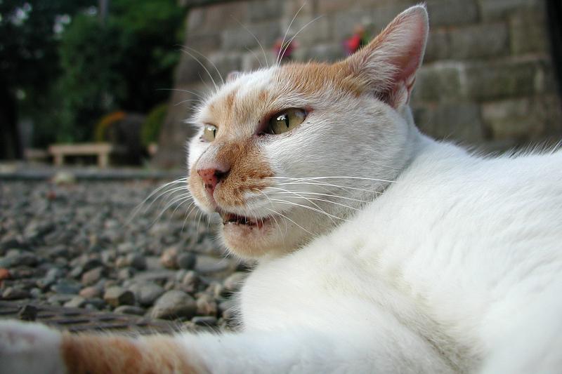 夏の夕空が瞳に映る猫