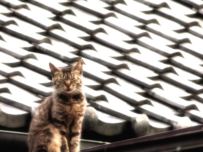 屋根瓦と猫