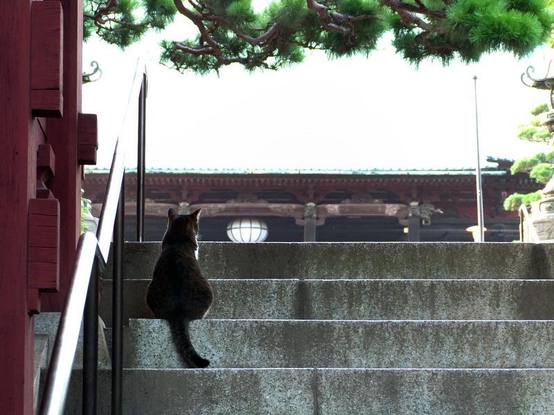 お寺の階段の猫