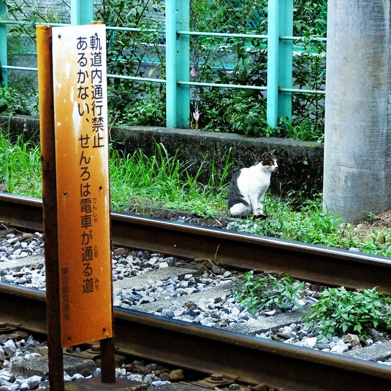 都電の軌道に居る猫
