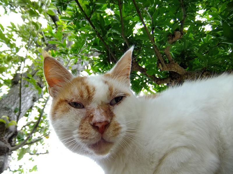 覆う様に茂る樹木の下の猫