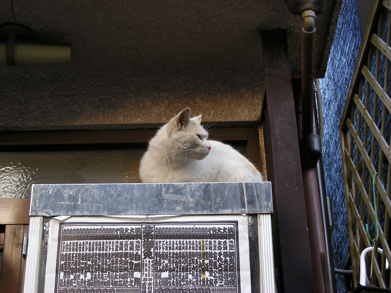 番付表が貼られたドリンクケースに乗ってる猫