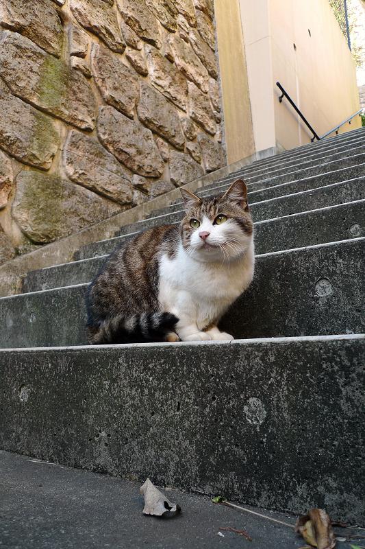 階段で微笑んでるネコ